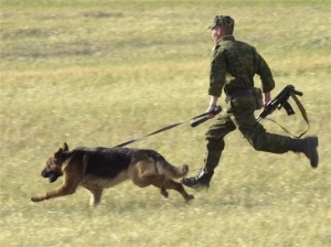 В Столинском районе задержан нарушитель границы